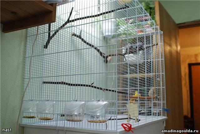 Сонник птиц в клетку сажать 39