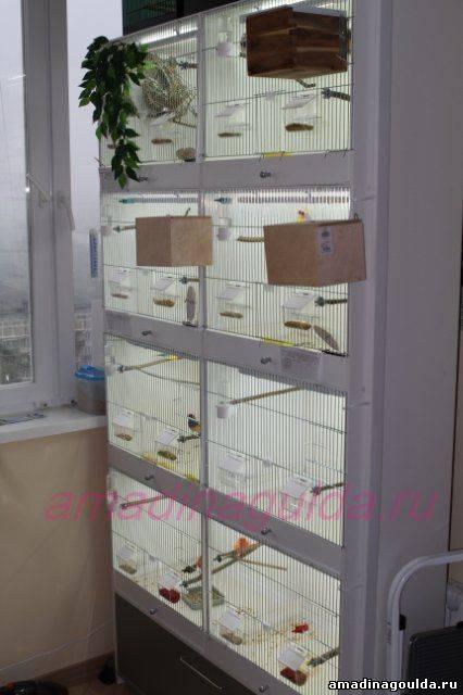 птичий шкаф для развидения