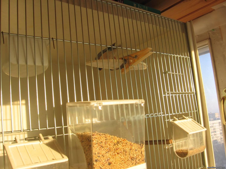Клеточное содержание птицы в домашних условиях