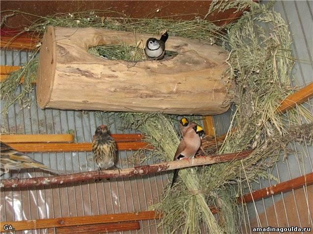 Вольеры для птиц своими руками