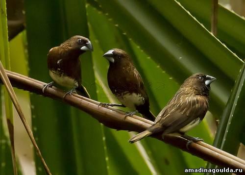 Чем кормить волнистого попугая 21