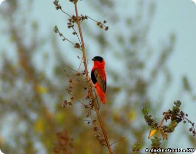 Порой у любителей встречаются птицы