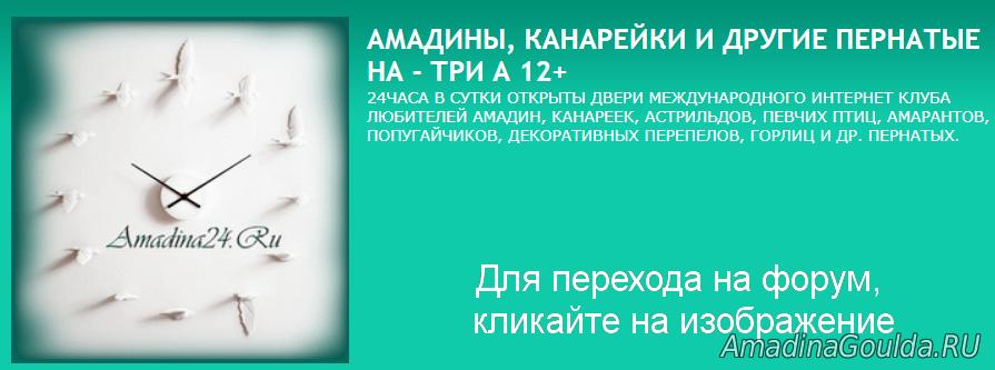 Амадины Астрильды Амаранты разведение, содержание,ветконсультации